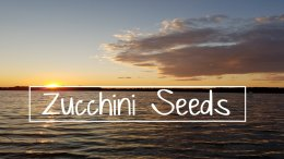 Pause to Consider - 'Zucchini Seeds' Video Podcast