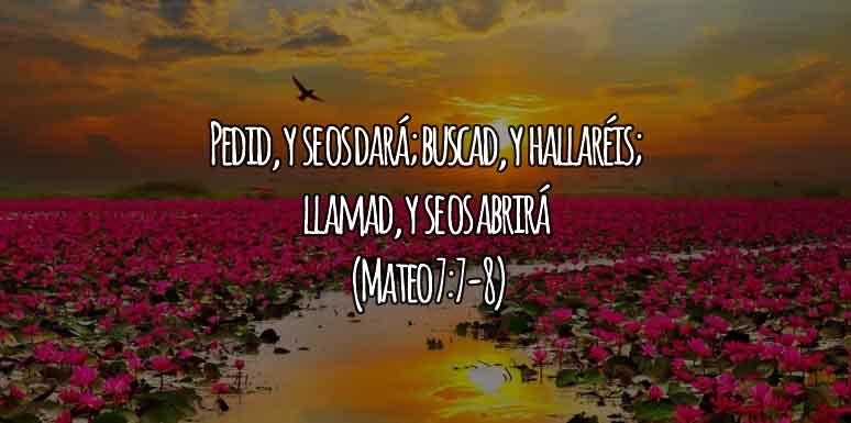 Mateo 7