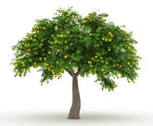 How-to-Plant-Cold-Resistant-Fruit-Trees-sm
