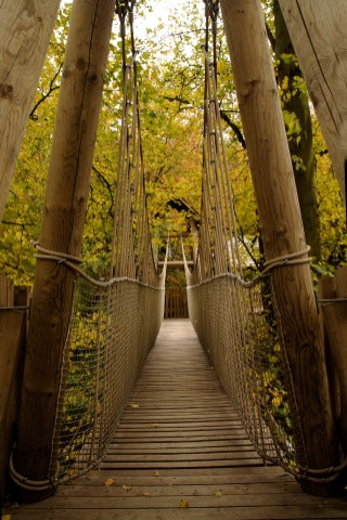 the aerial walkway at alnwick garden treehouse
