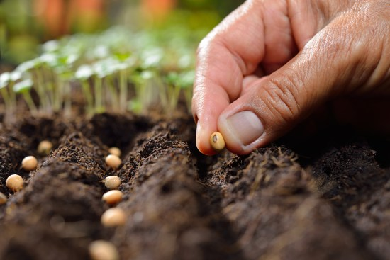 Closeup of farmer's hand planting seed in soil