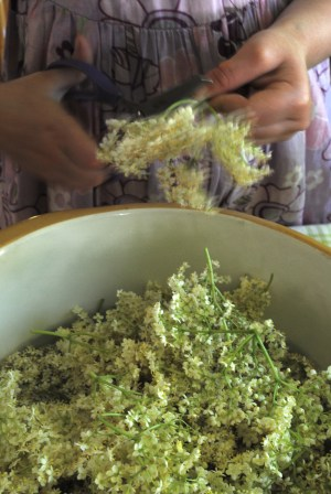 Bibliocook.com - making elderflower cordial