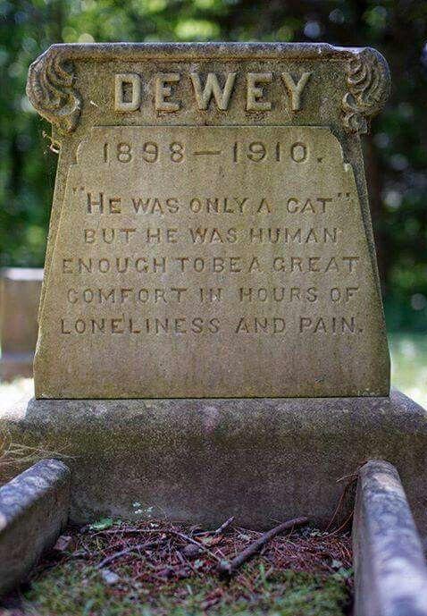 Cat headstone Peculiar Cat funerals in the Victorian