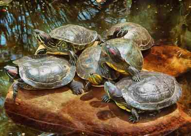 tortoise-turtle-stock-free-image-06022016-image-569