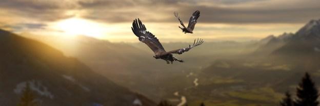 Ant erelio sparnų