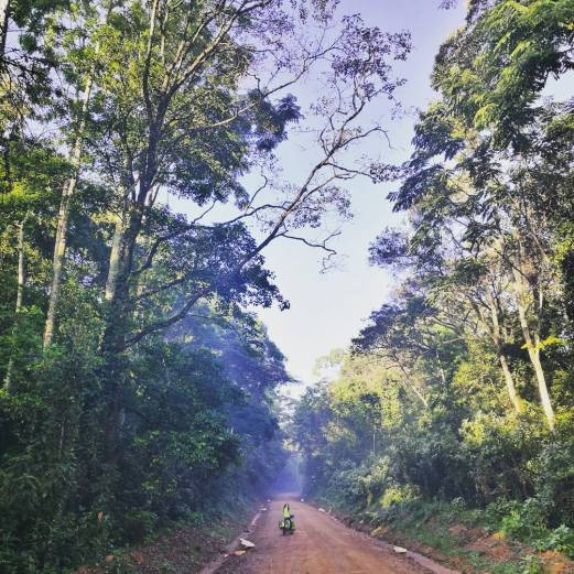 Kakamega rainforest that I am cycling to protect