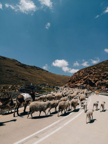 A local traffic jam descending down the other side of Black Mountain