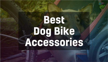 Best Bike Accessories for Dogs- Recommended Gear