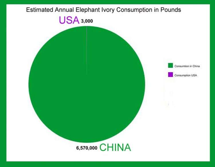 Estimate Of Annual Ivory Consumption: USA V China,