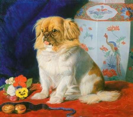 looty the dog