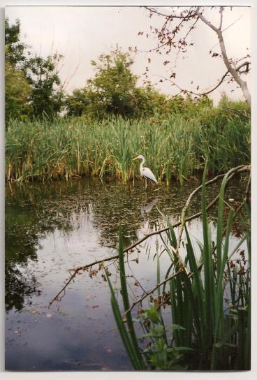 Another patient heron