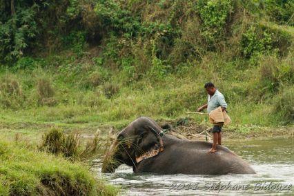 chitwan51