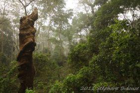 chitwan54