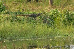 chitwan59