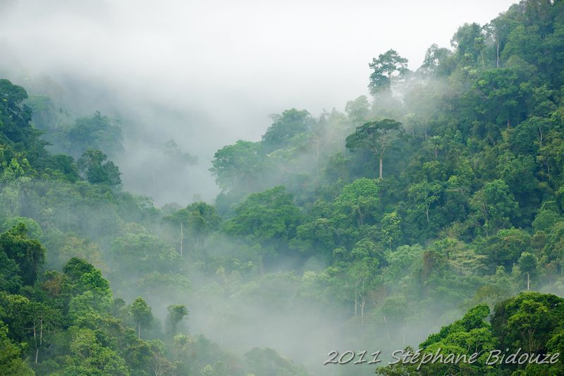 Le parc national de Kaeng Krachan