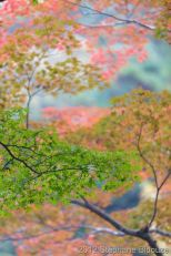 japanese fall background