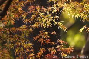 Japon 2011_00559