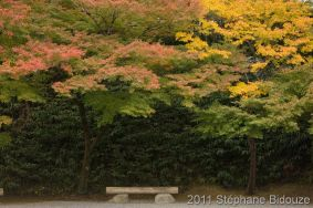 japanese autumn scenery
