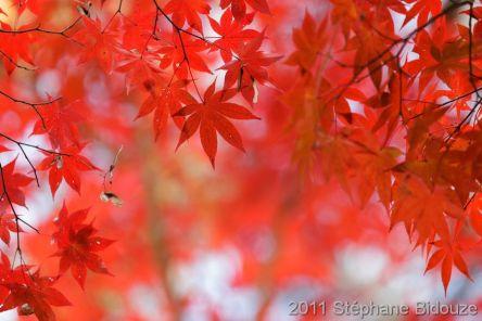 Kyoto: les jardins Zen
