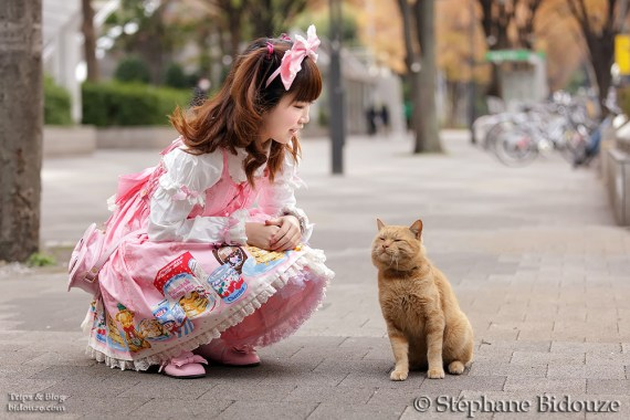 lolita cosplay and cat