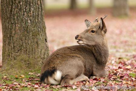 cute deer