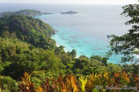 jungle and sea landscape