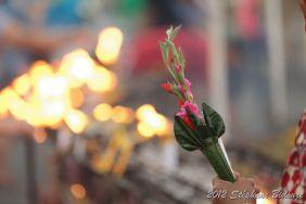 Thailande III_02772