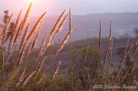sunrise in meadow