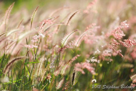 meadow under sunlight
