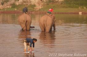 elefantasia178