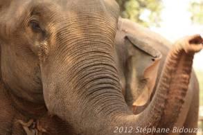 elefantasia196