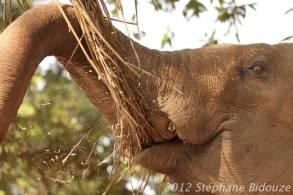 elefantasia200