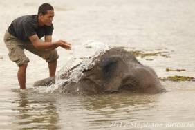 elefantasia272