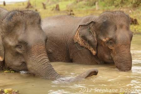 elefantasia274