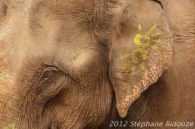 elefantasia279