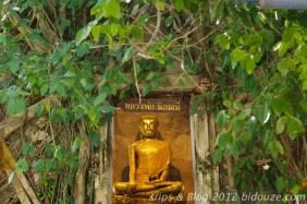bangkok iv117