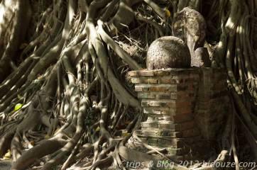 bangkok iv118
