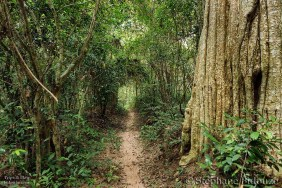Tropical forest path