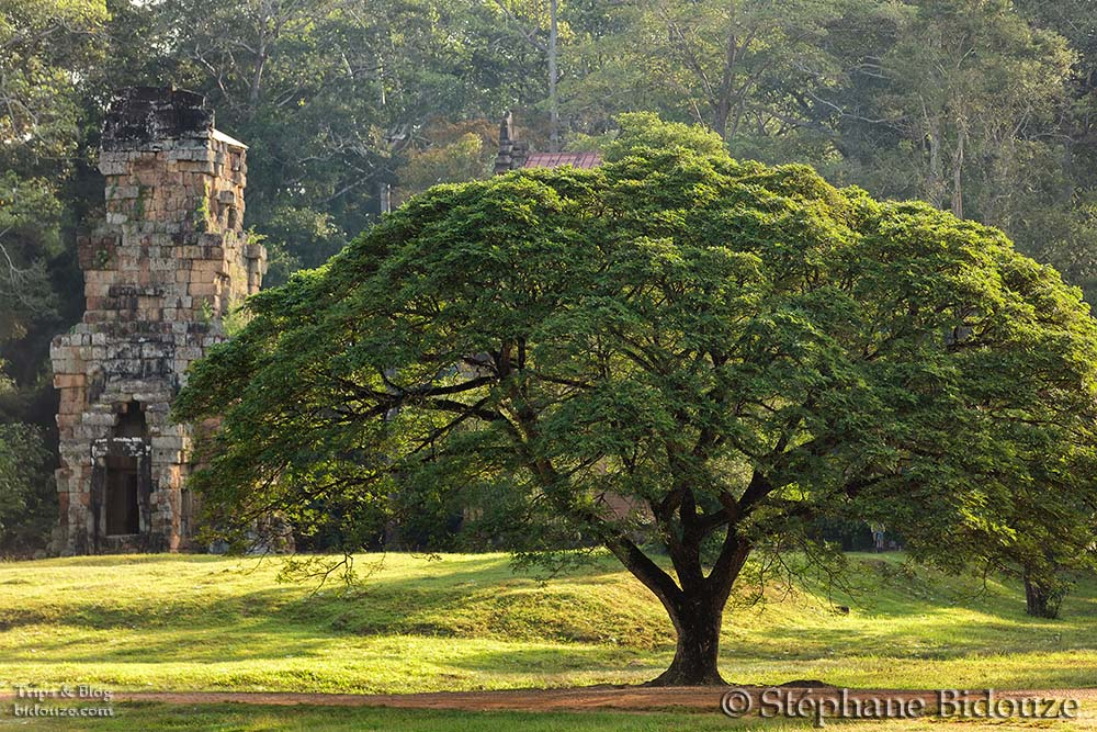 Large tree and temple