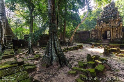 Angkor jungle and ruins