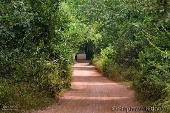 Wild tropical path