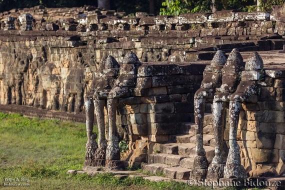 elephant Terrace 2