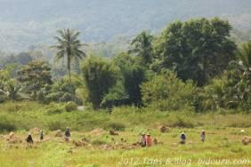 thailande iv_04837