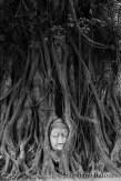 head-buddha-ayutthaya
