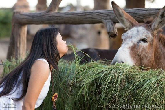 woman-donkey-eating-grass