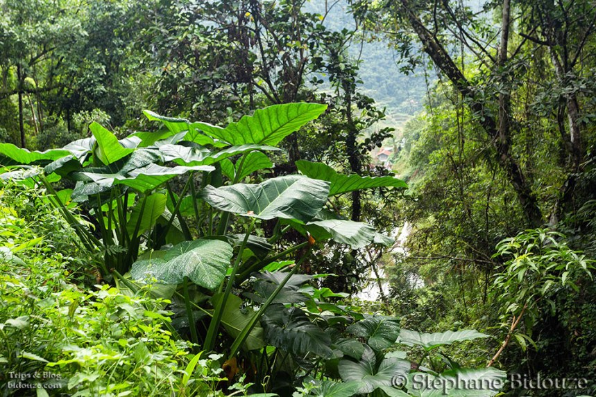 Lush foliage on the way