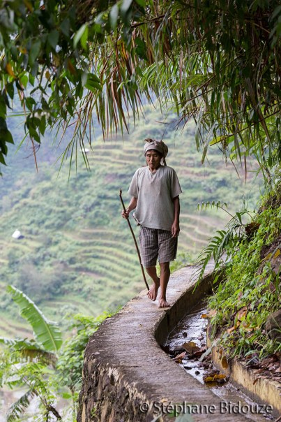 Un Ifugao marchant sur le mur des terrasses