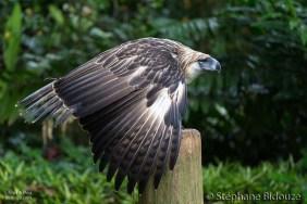 eagle-philippines-davao-mindanao