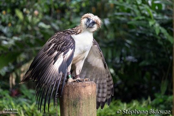 davao-aigle-philippines
