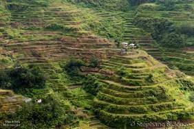 terrasse-riz-banaue